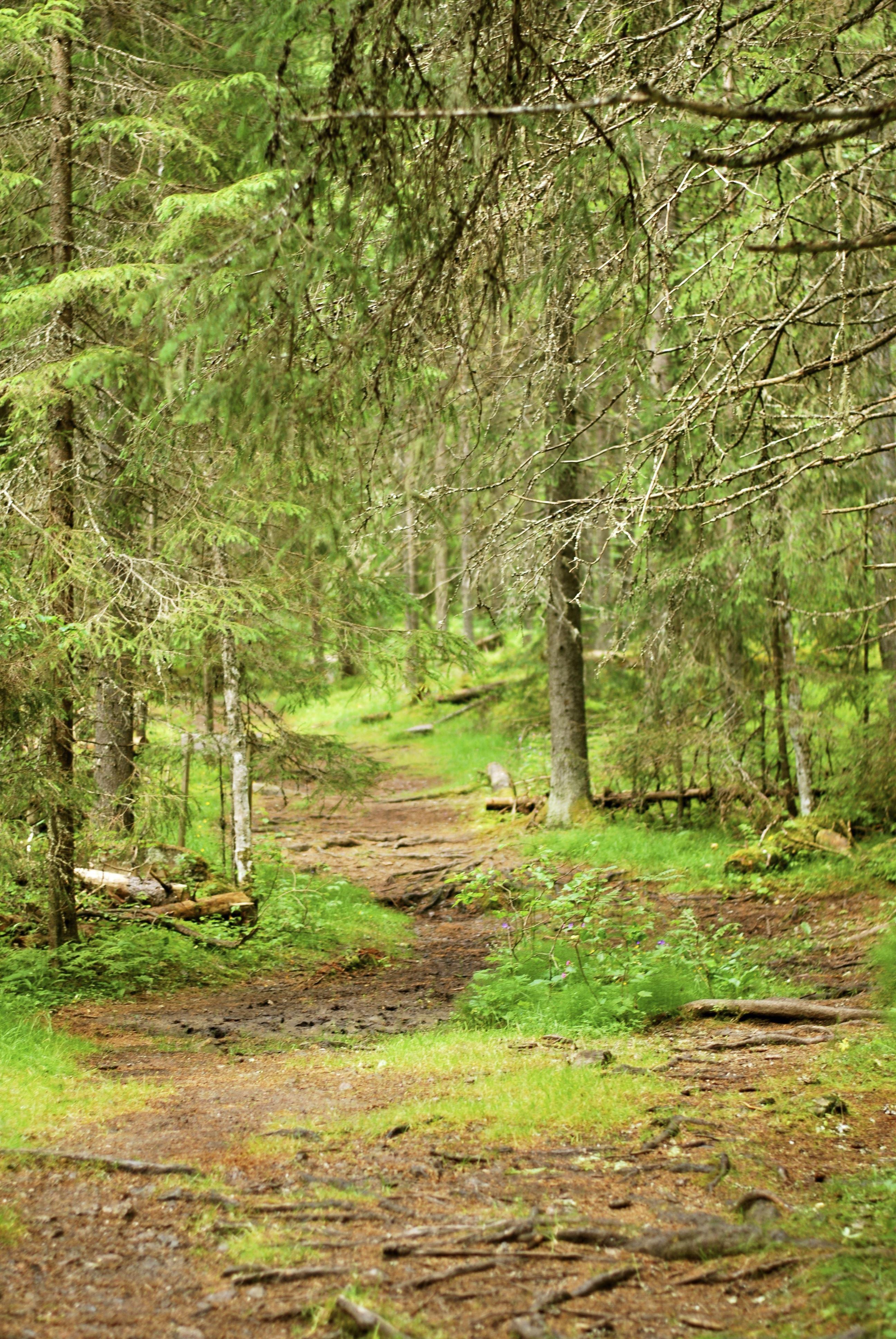 Rakt ut i skogen