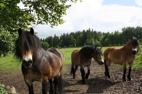 Pferdecenter Hults Brukshästar