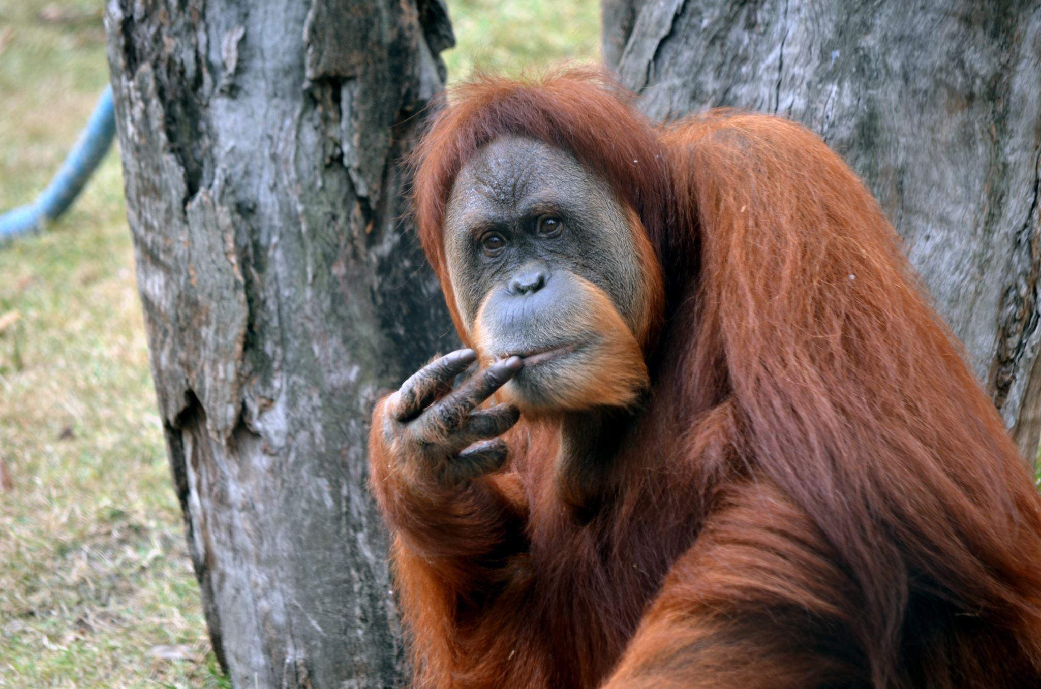 Reseberättelse från Borneo