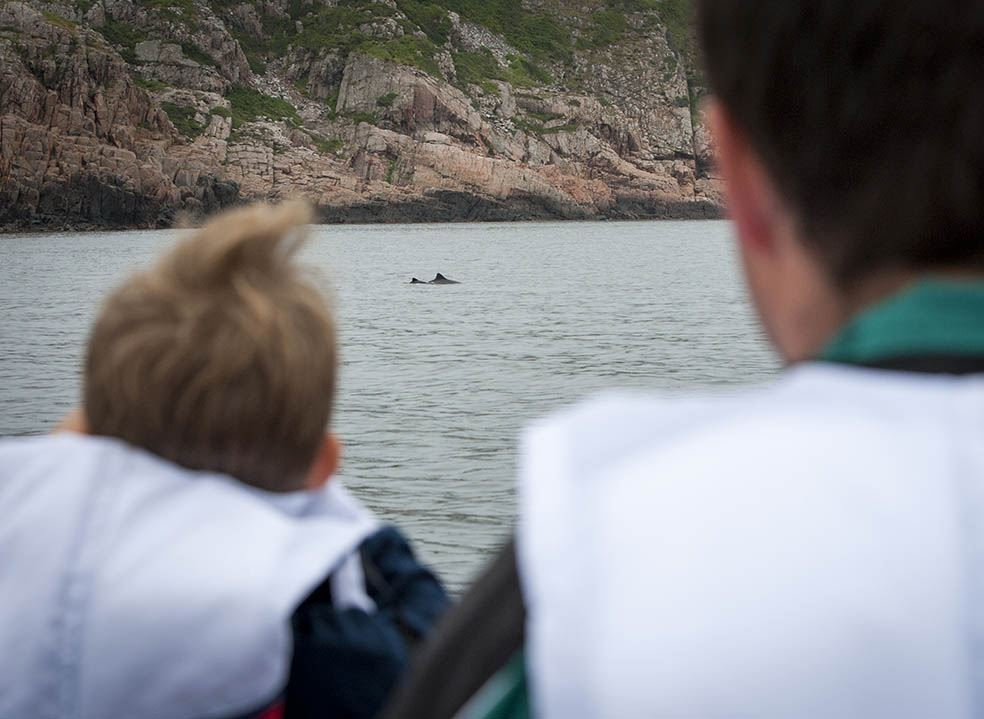Porpoise safari in an RIB – an adventure at Kullaberg