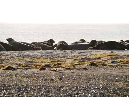 Seal morning at Nabben.