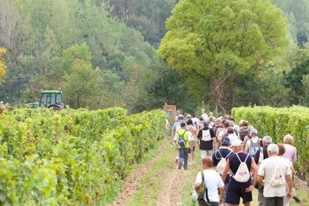 Wines,vines and hiking around Vouvray