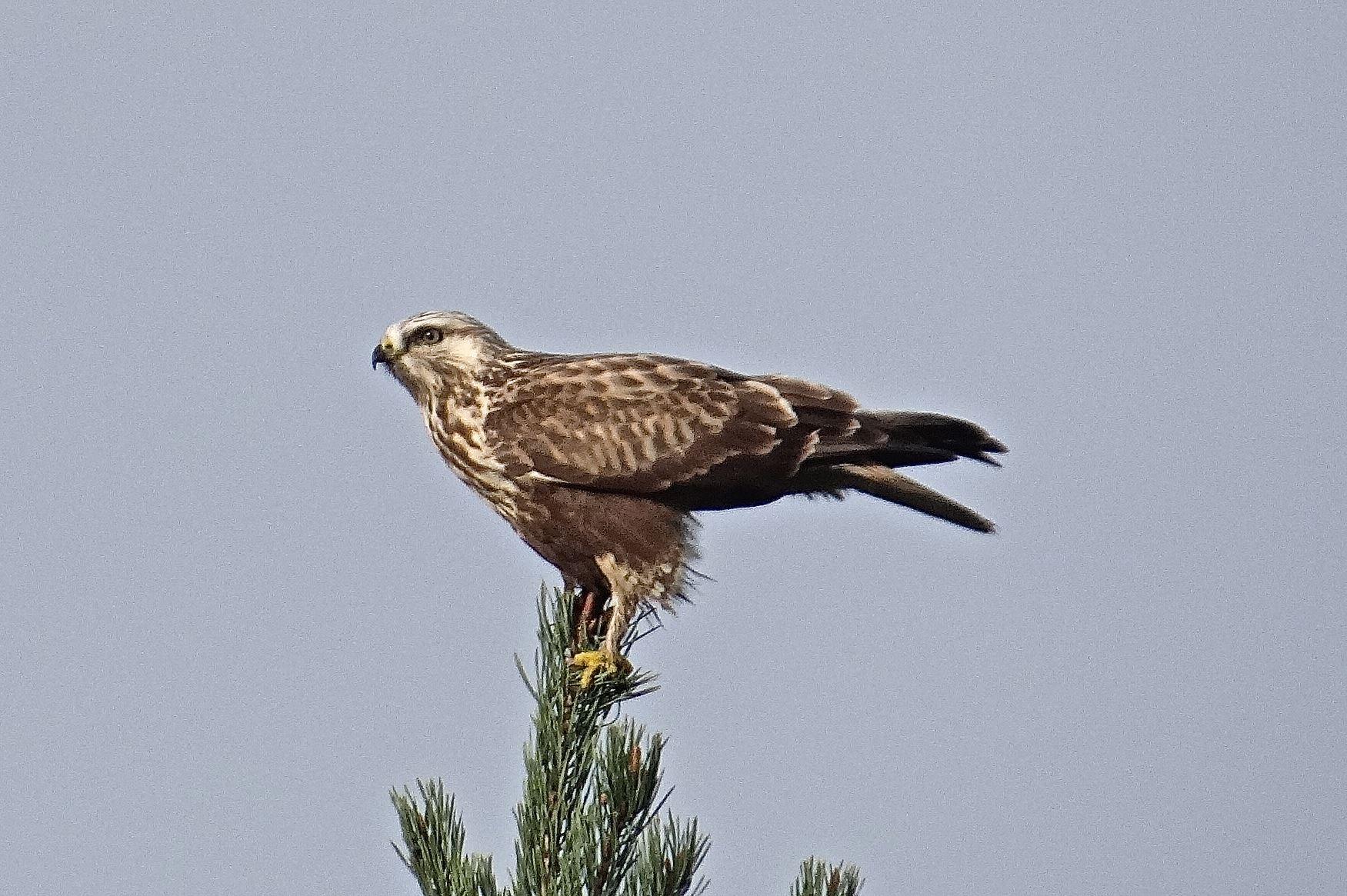 Svalgårdens Fågelmöte 5