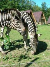 Ölands Tier und Vergnügungspark
