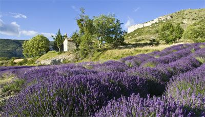 All Provence in a day, Baux de Provence, Saint Remy, Gordes, Roussillon et Lourmarin