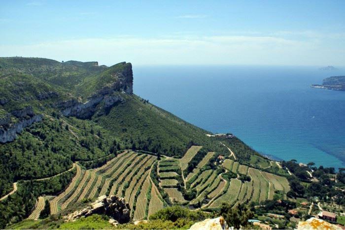 Full day Bandol & Cassis wine tour