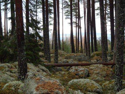 Naturreservat Larzonska