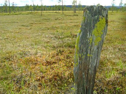 Länsstyrelsen Dalarna, Veksjömyr naturreservat