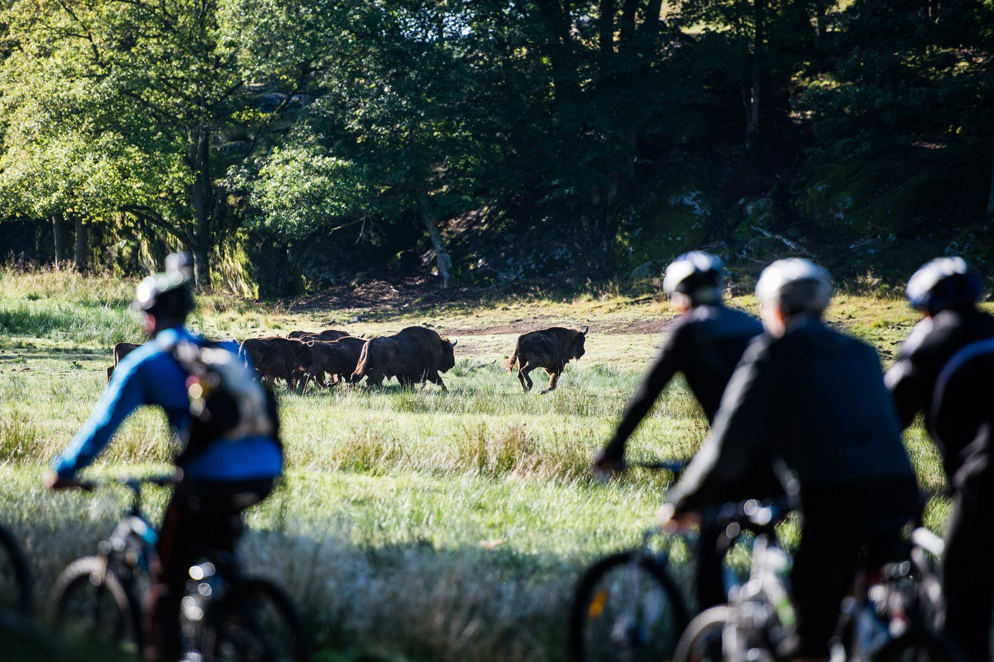 Bike Safari among wild animals