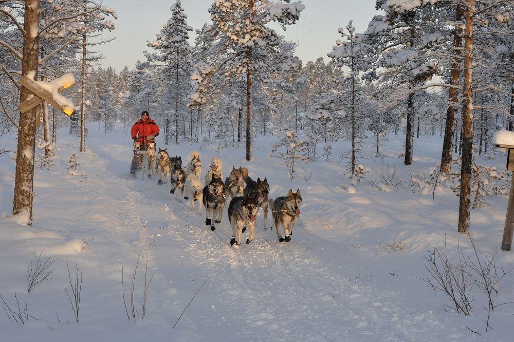 Hundspannsspår i Nornäs