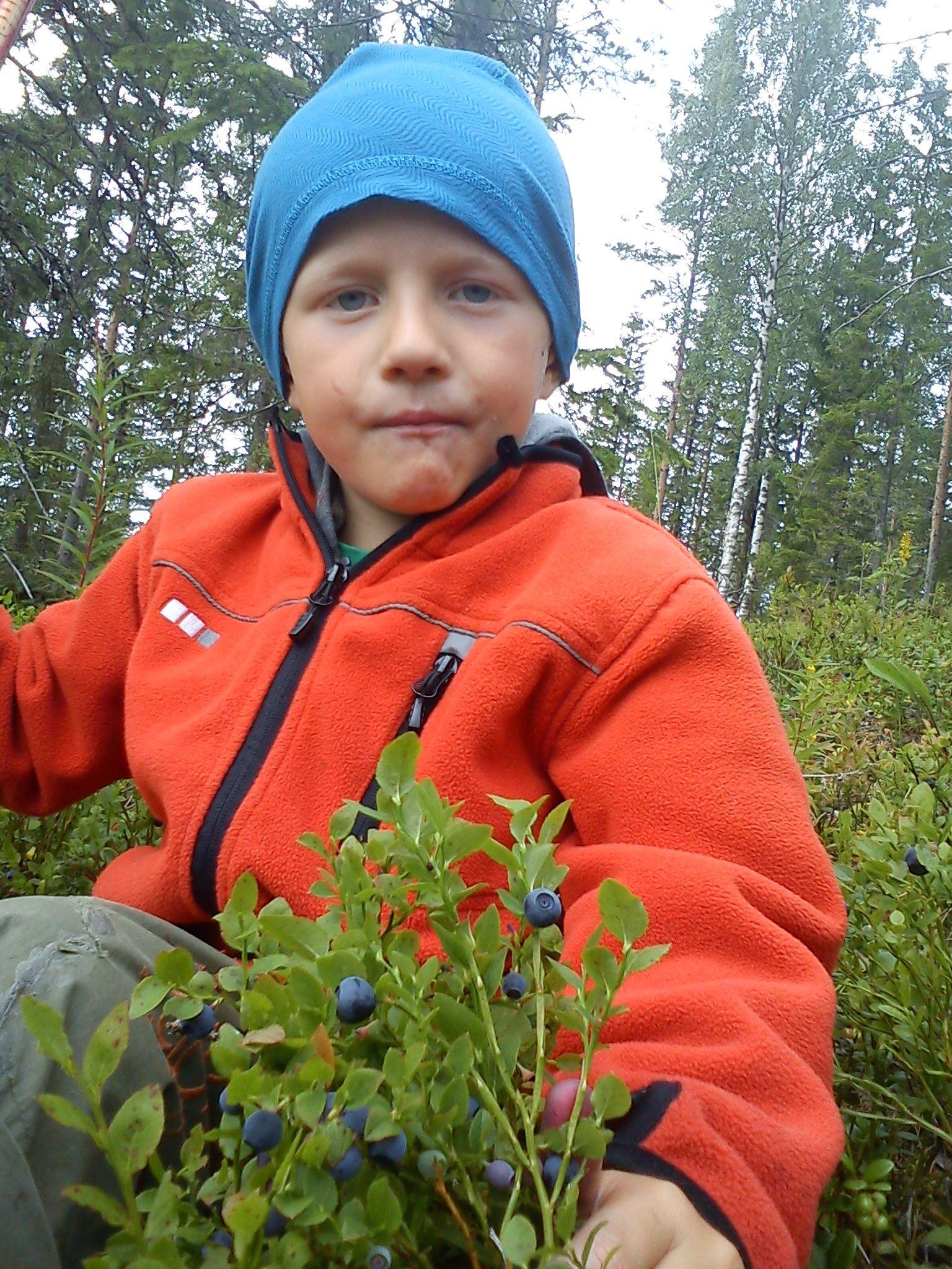 Vandring och vi söker efter skogens bär