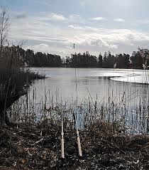 Fågelskådnings dag runt Linnéasjön!