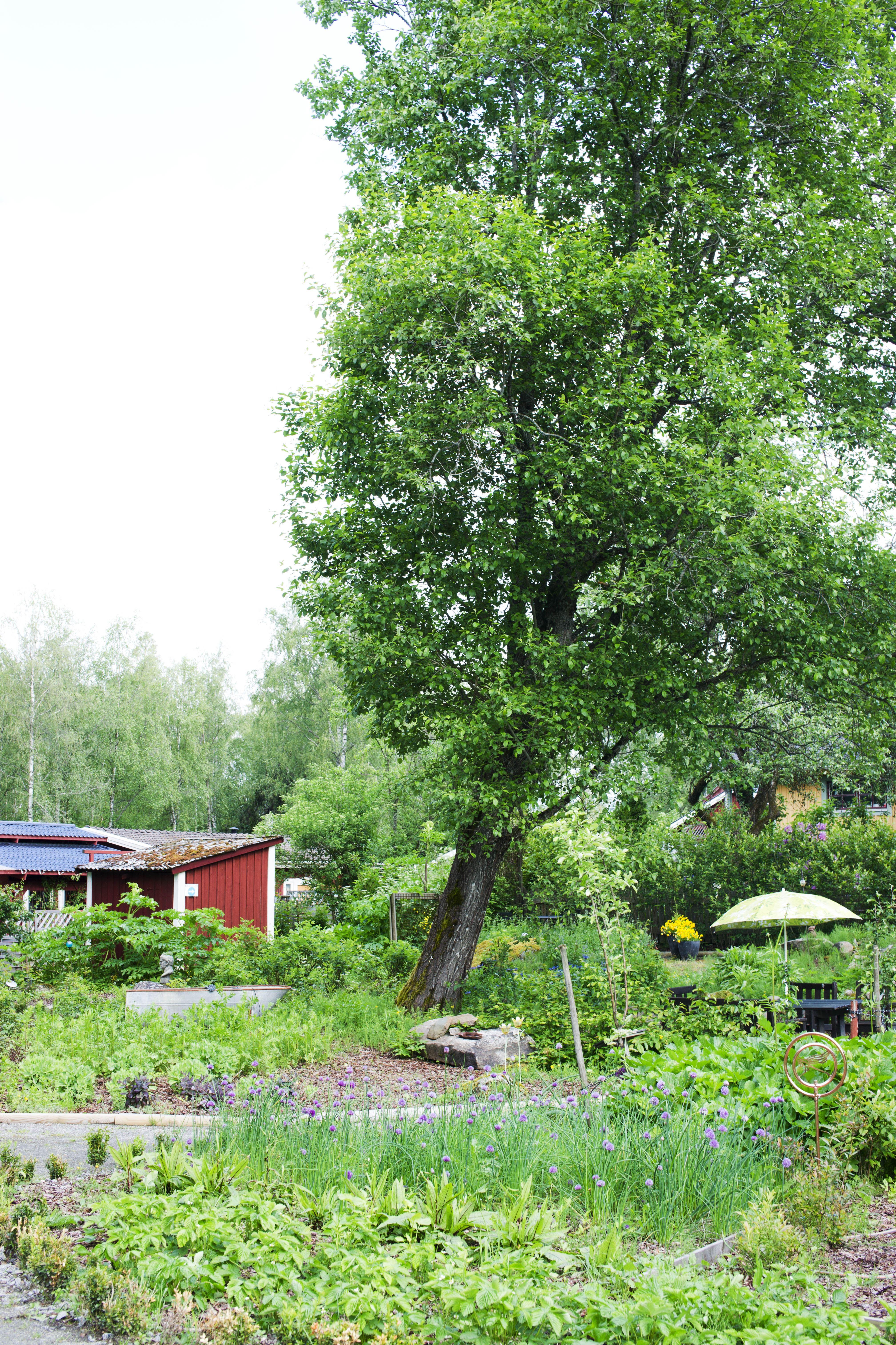 Timjan,  © Värnamo Näringsliv AB, Timjans Örtagård & Visningsträdgård