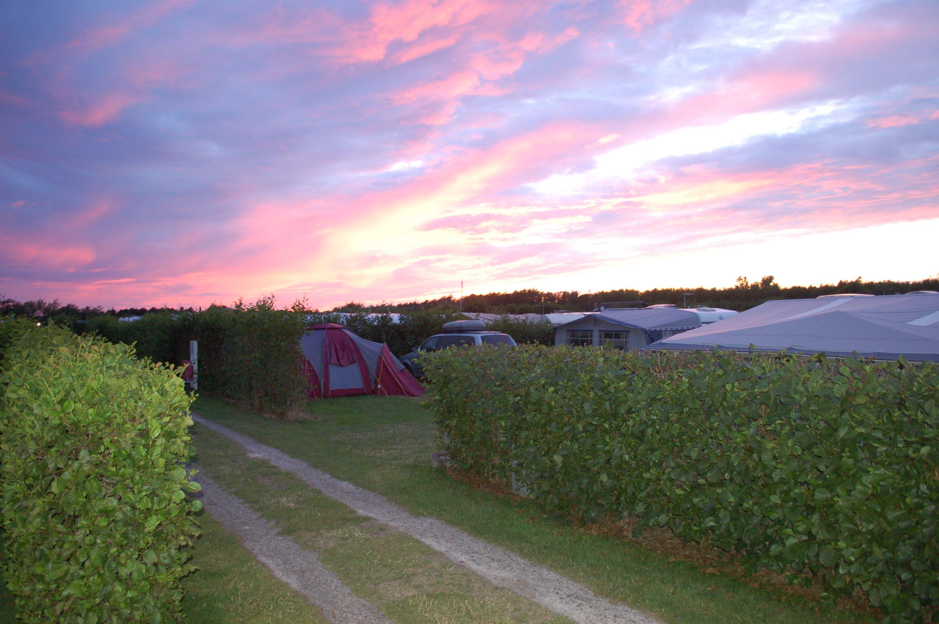 Rødgaard Camping - Camp site