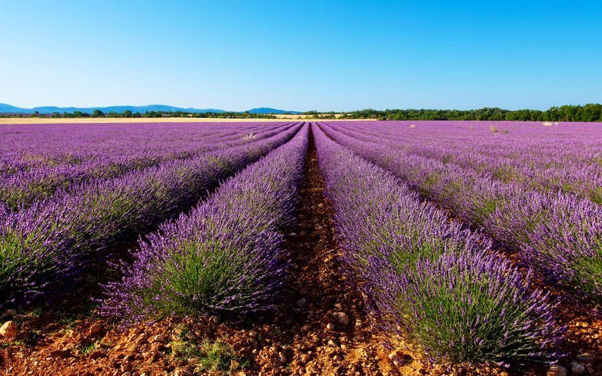 Ocean de Lavande et Aix en Provence