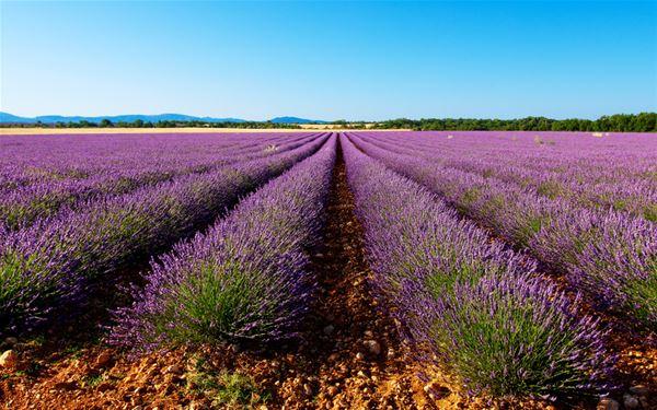Lavender Ocean and Aix en Provence