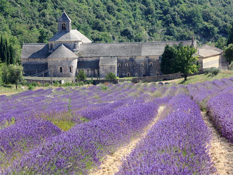Excursion Lavender Tour : Gordes, Abbey of Senanque and Roussillon or Sault