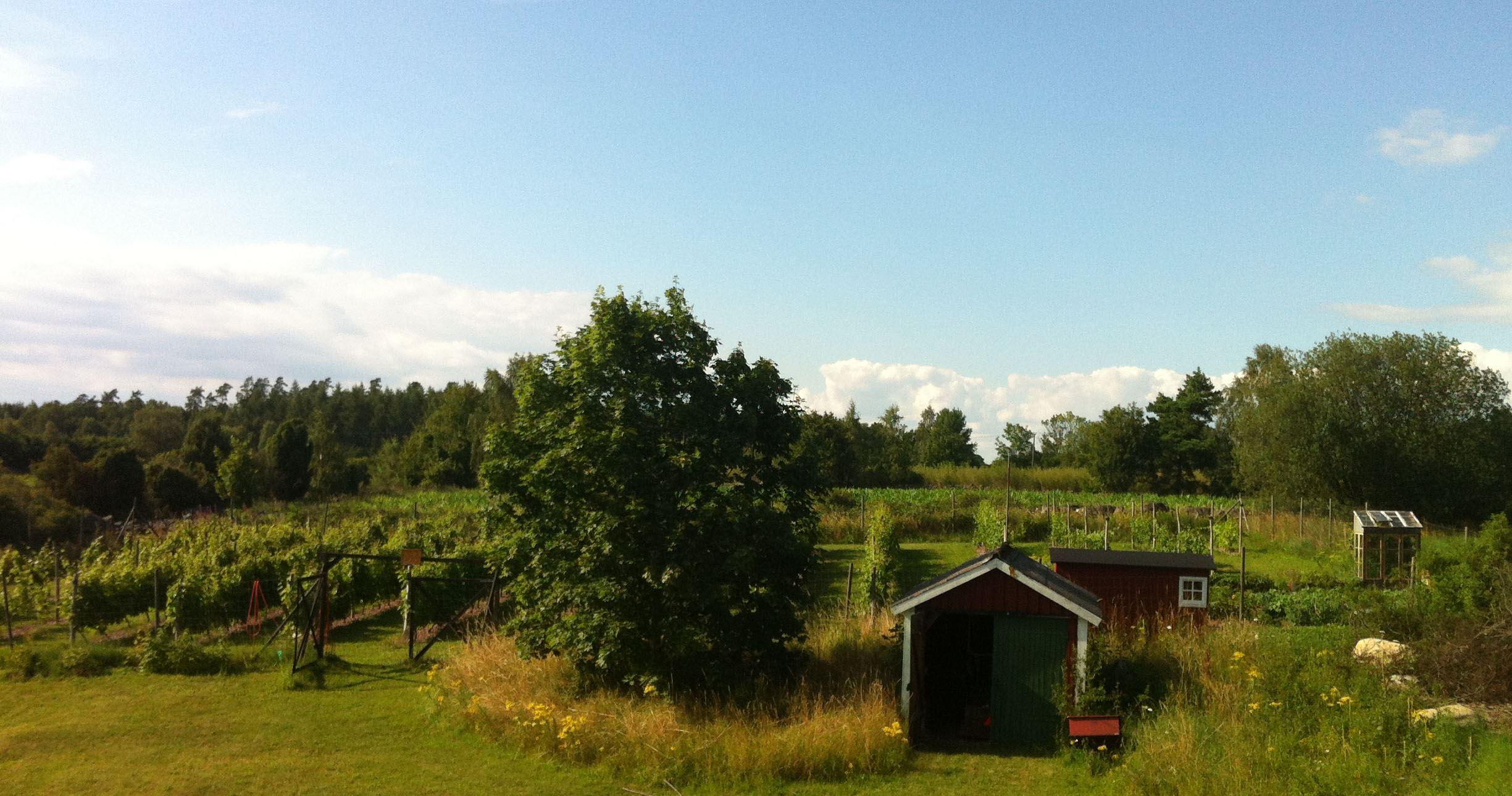 Gullyckevin - Gullycke Vingård