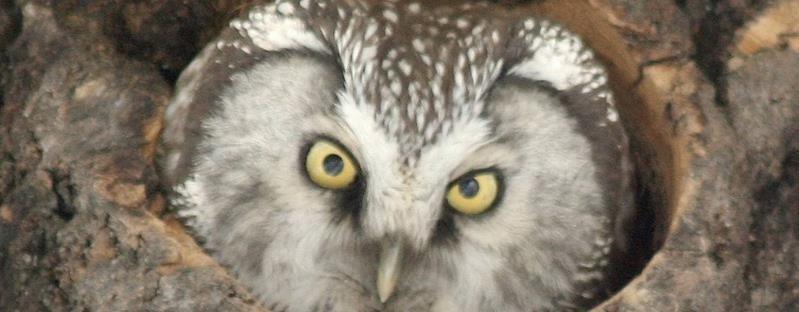 Owl Safari - Fjellkysten Gjestehus