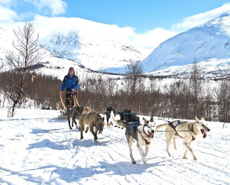 © Lyngsfjord Adventure - Hundekjøring, Hundeschlittenausflug Camp Tamok - Lyngsfjord Adventure