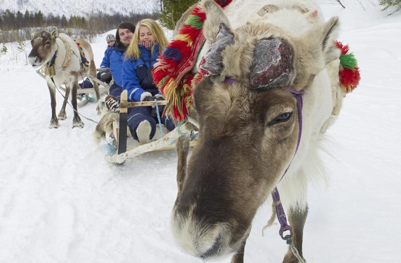 © Lyngsfjord Adventure - Reinkjøring, Northern Lights Reindeer Sledding Camp Tamok  - Lyngsfjord Adventure