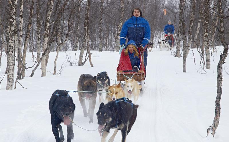 © Lyngsfjord Adventure - Hundekjøring, Hundesledetur Camp Tamok - Lyngsfjord Adventure