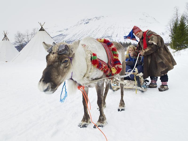 © Lyngsfjord Adventure - Reinkjøring, Samische Kultur und Rentierschlittenfahrt unter dem Nordlicht - Camp Tamok