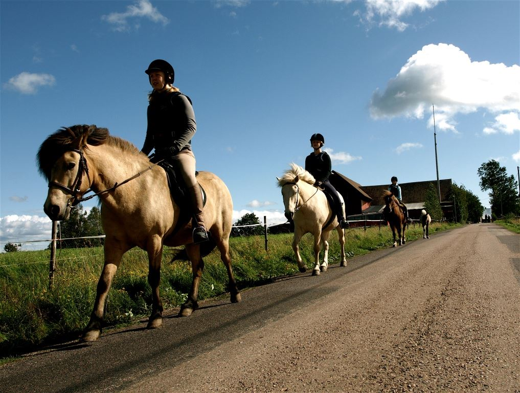 Emma Ride Icelandic - Horseriding