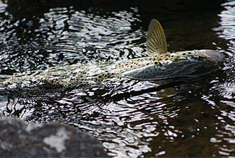 Kortfiskeområde Andersträsk - Storlidträsket – Sönnersttjärn