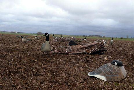 Goose Hunting in Gåsriket