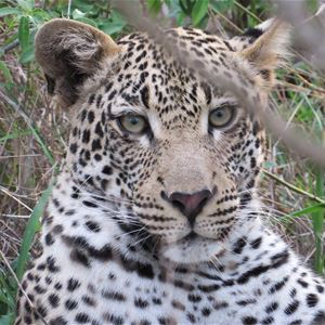 Naturbilder från Tanzania