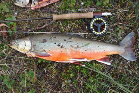 5-dagars rödingfiske