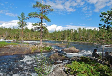 Fishing licenses Trollforsen Pite