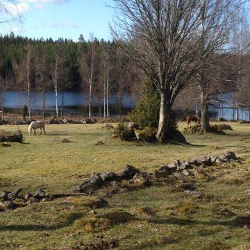Amerikaveckan: Guidad vandring vid Sjöarp, Västra Ryd