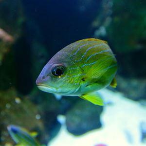 Visite de l'Aquarium (Visite libre)
