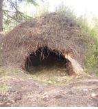 Lilla Björnforsknings - Exkursionen i det vilda