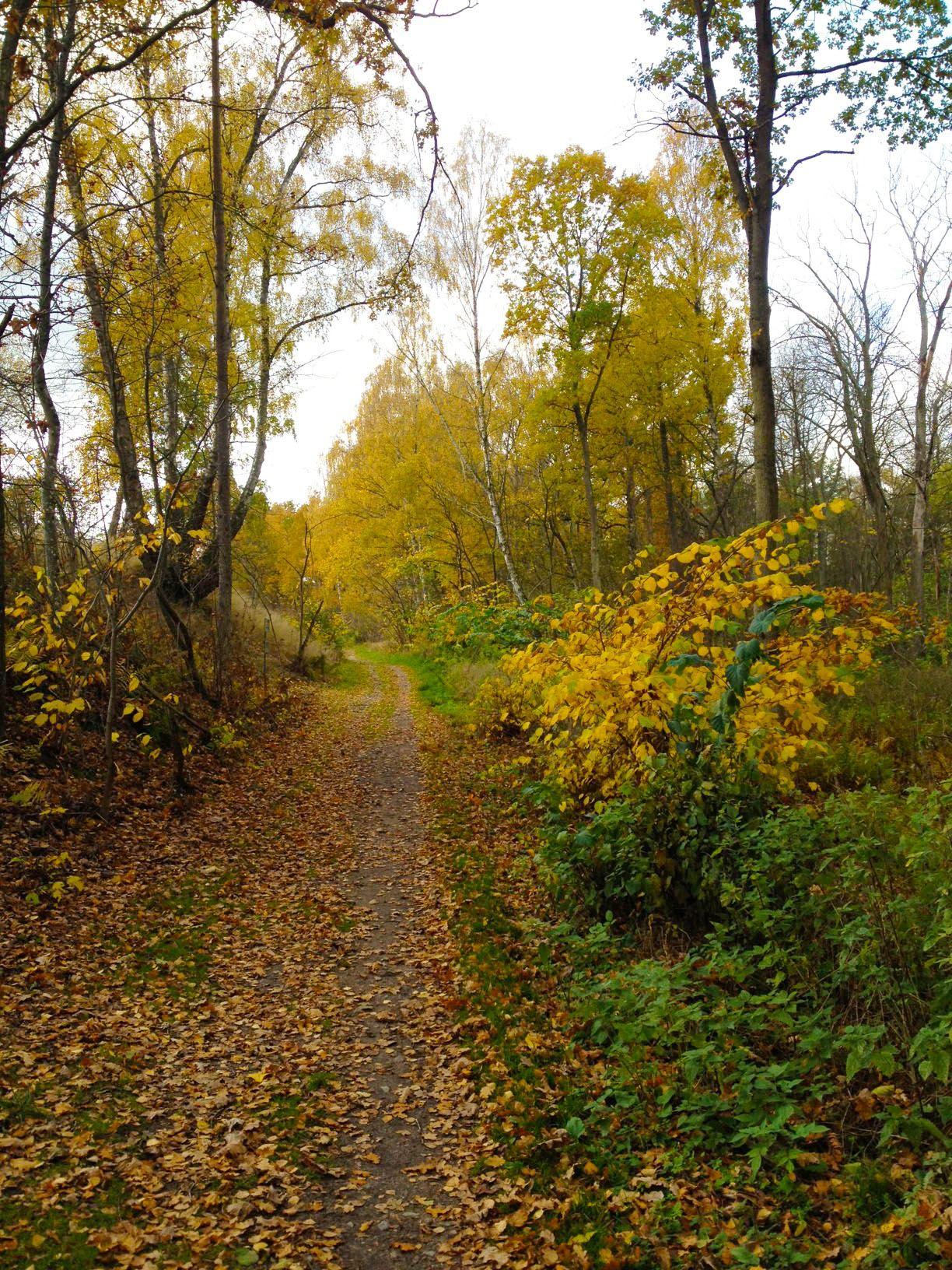 Running tracks Strandängen - Gualöv