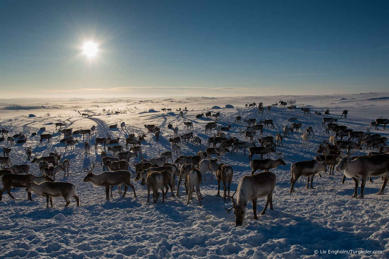 8 days - Sámi reindeer spring migration – Tour of a lifetime