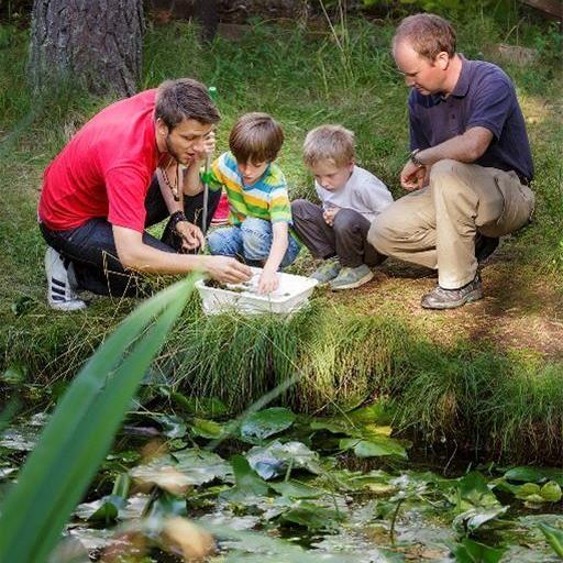 Nyfiken på dammen