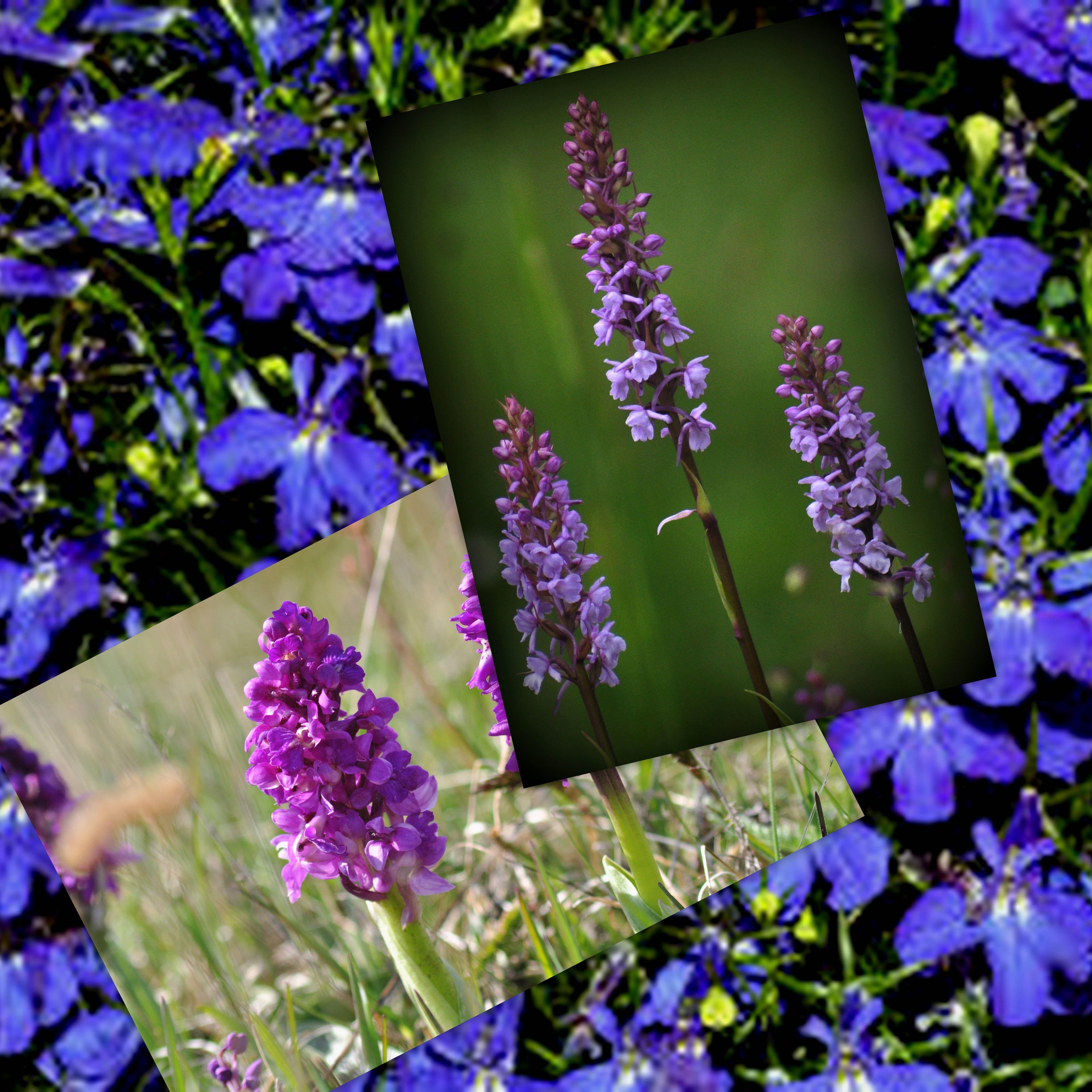 Försäljning av blommor och fotoutställning hos IOGT-NTO Gunnebo-Västrum
