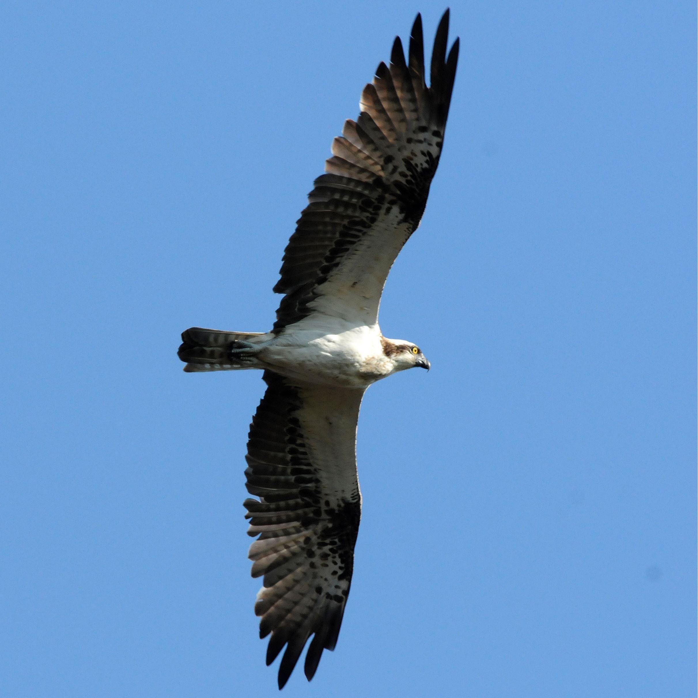 Fågeltorn - Sonnboviken, Avesta