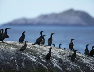 © Birdsafari AS, BirdSafari  - the number two attraction at Nordkapp