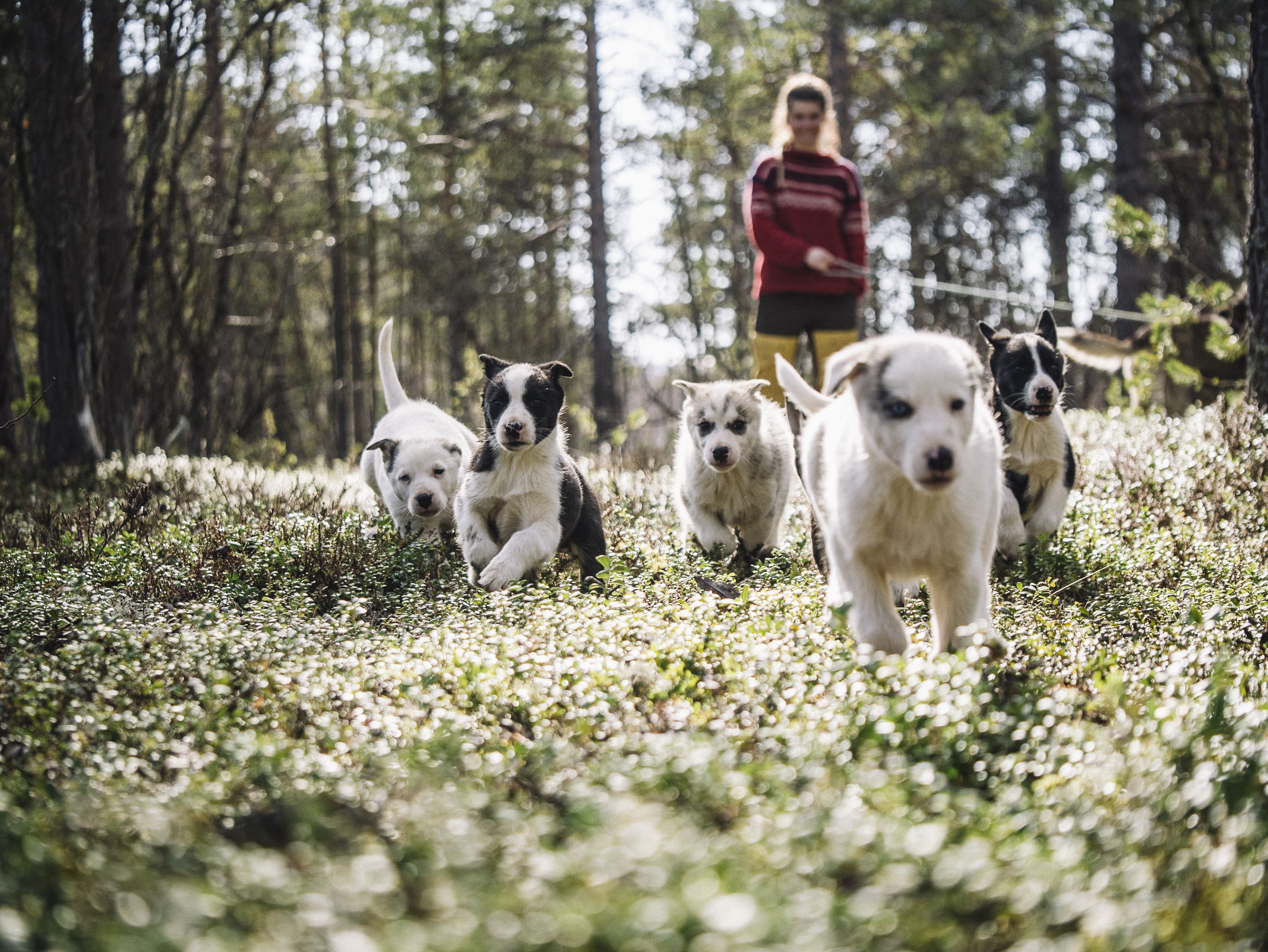 Walking with the puppies / Trasti og Trine