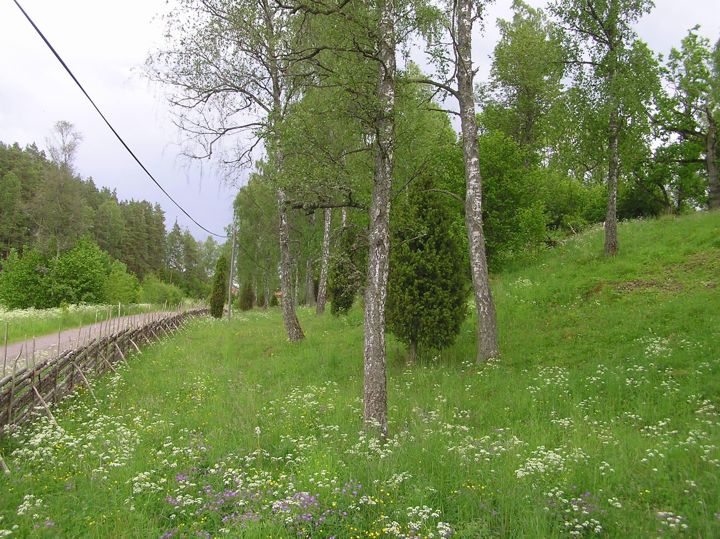 Charlotta Larsson ,  © Länsstyrelsen i Kalmar län, Narturreservat Lunden