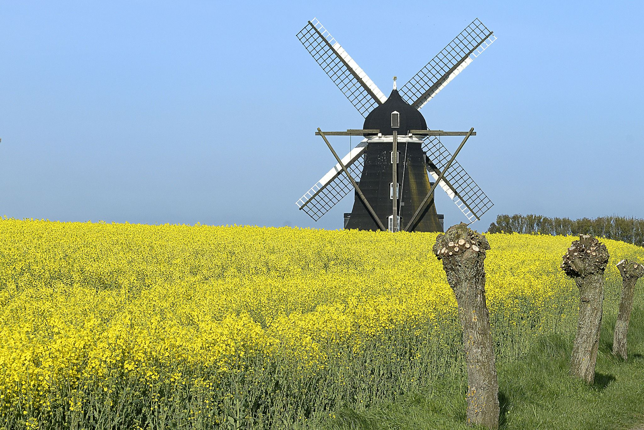 Wind mill day