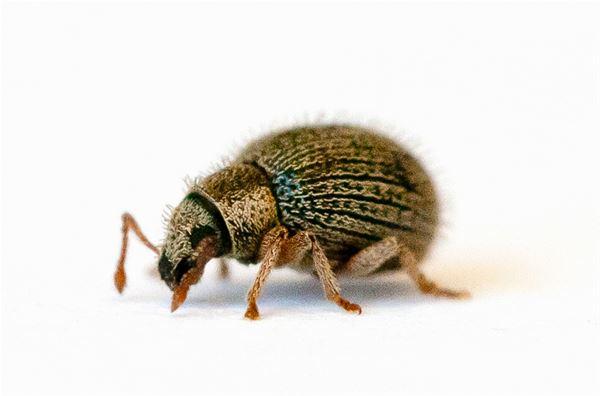 Entomologi - i ropet eller bara en fluga?