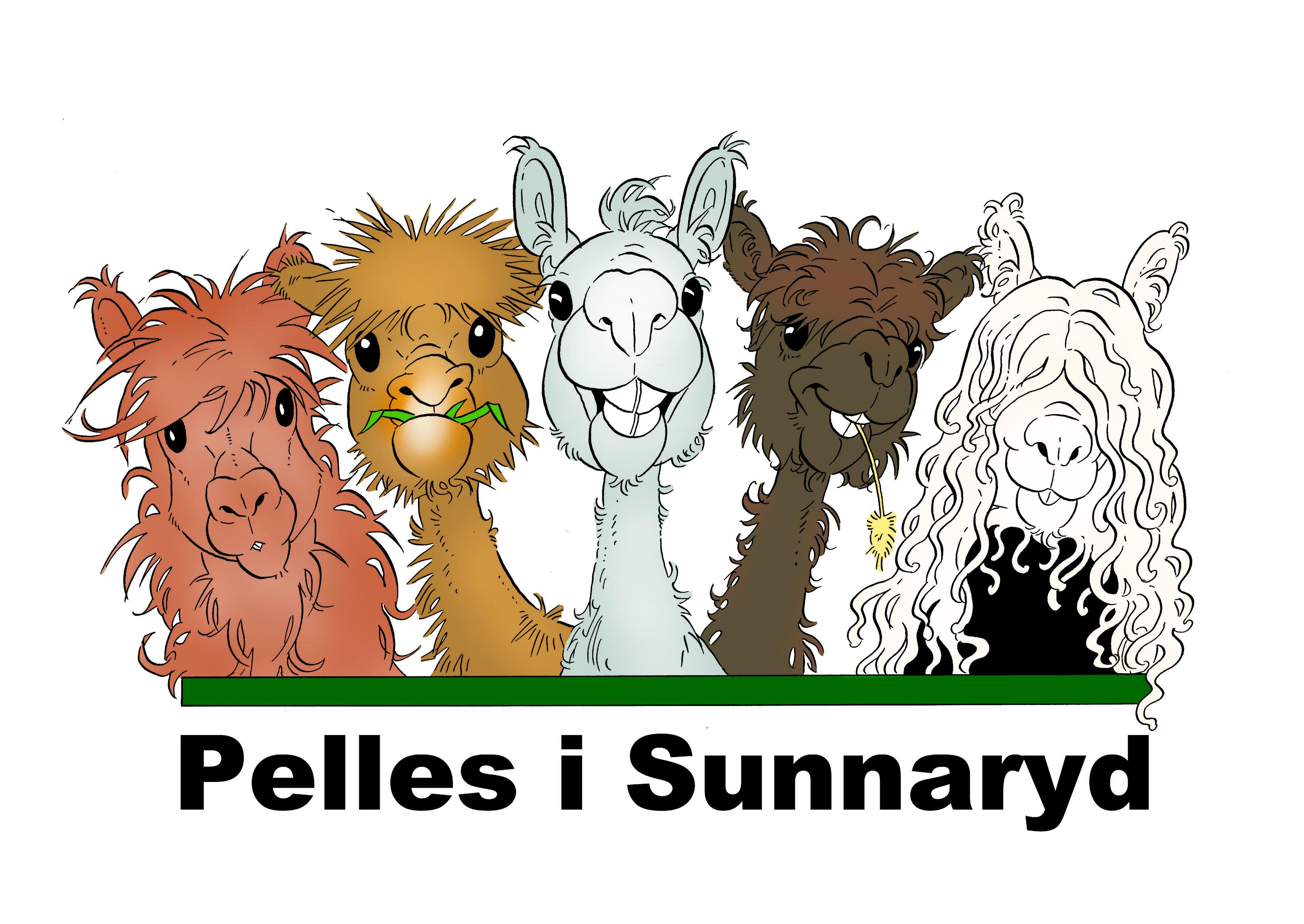 Alpaca at Pelles i Sunnaryd