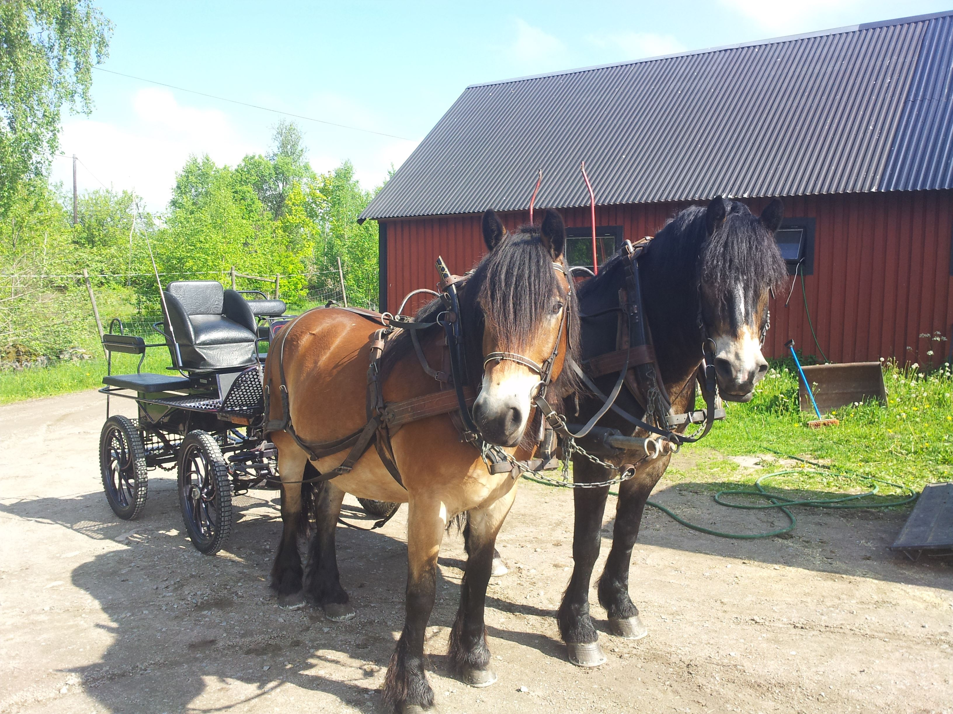 Horse and carriage - Stall Labbabacken