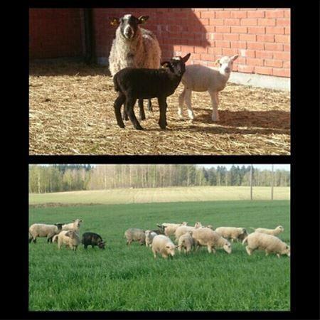 Klockarbackens Lantbruk
