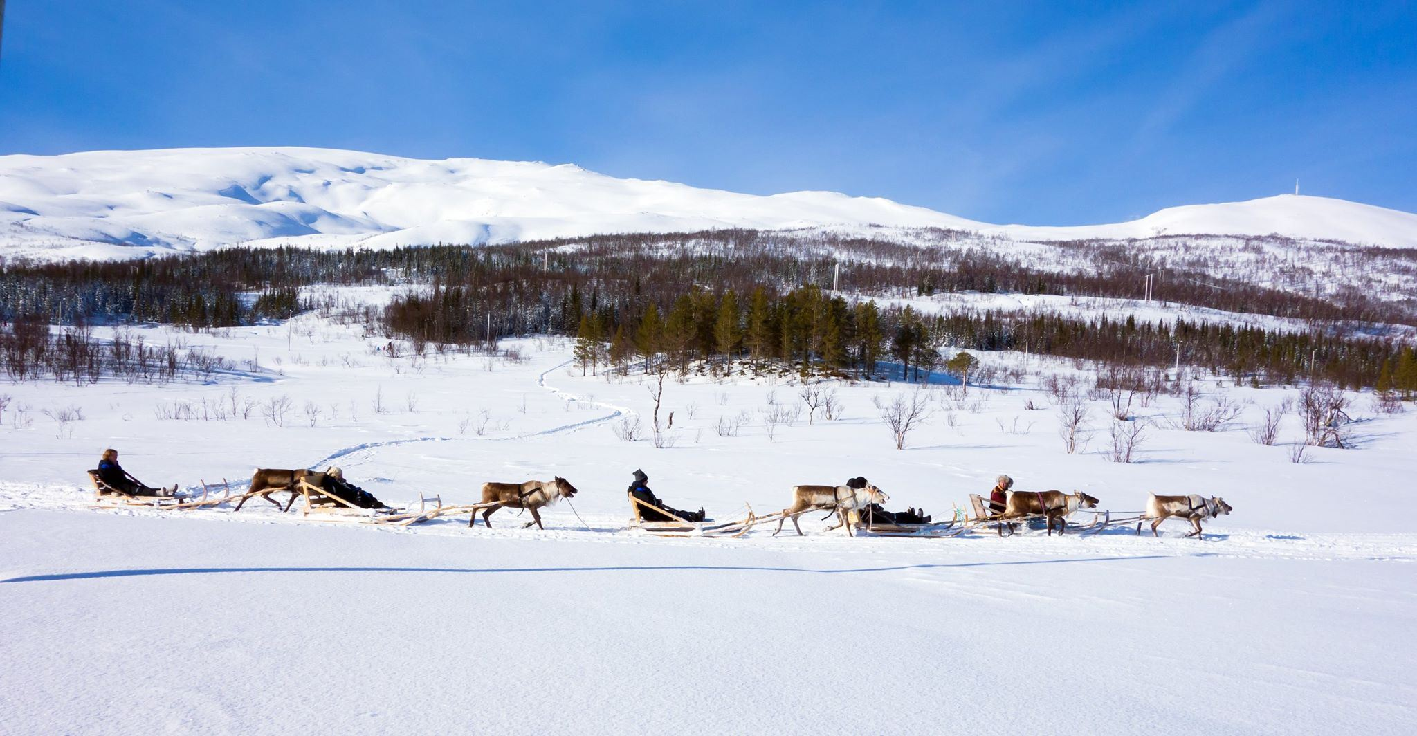 Reindeer Sledding with Sami Culture